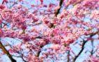 Japonsko vo vašej záhrade
