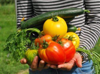 Zásady kompostovania