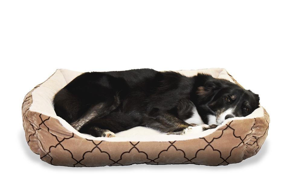 Má váš psík správny pelech?